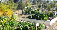 Gardening in the Arid Zone