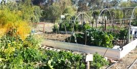 Gardening in the Arid Zone
