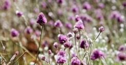Rainfall and desert flowers